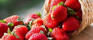 strawberry_festival-min