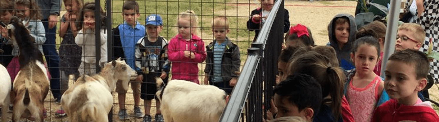 Petting zoo at Strawberry Fair hosted by Oceanport Lions Club of NJ